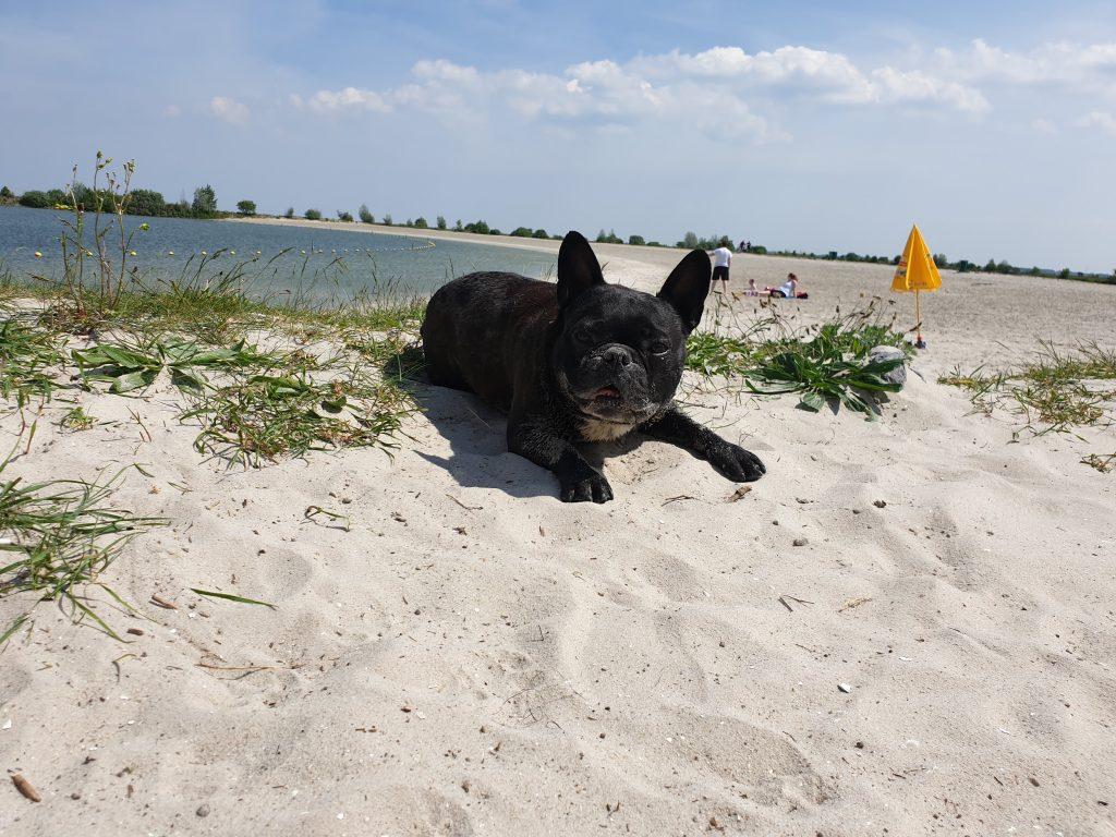 strand hund holland