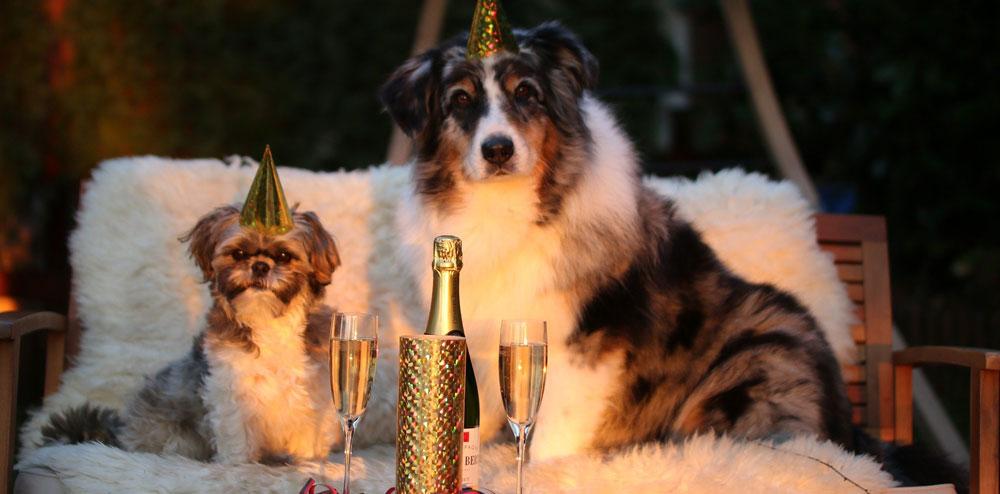 silvester mit hund im ferienhaus in holland