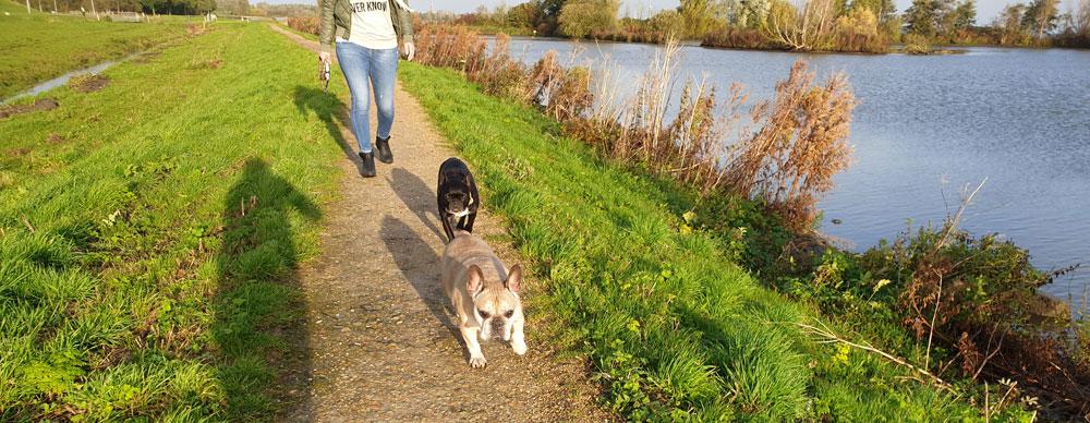 spazieren am ijsselmeer mit hund